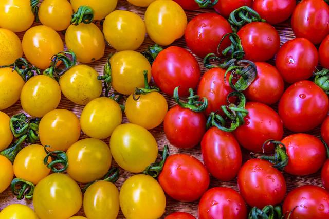 同是小番茄千禧果和圣女果竟有如此大的差别