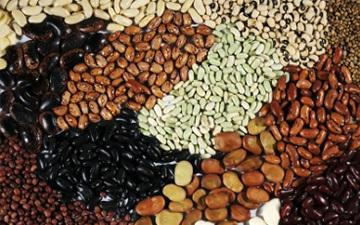 豆类,养生豆类,秋季豆类,养生豆类食谱,中医养生豆类