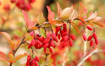 秋季养生,秋季养生,四季养生,秋季中医养生,秋季养生汤、食谱