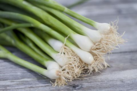 一清二白的小葱拌豆腐吃了几十年居然是不科学的!吃葱的禁忌你知道多少?