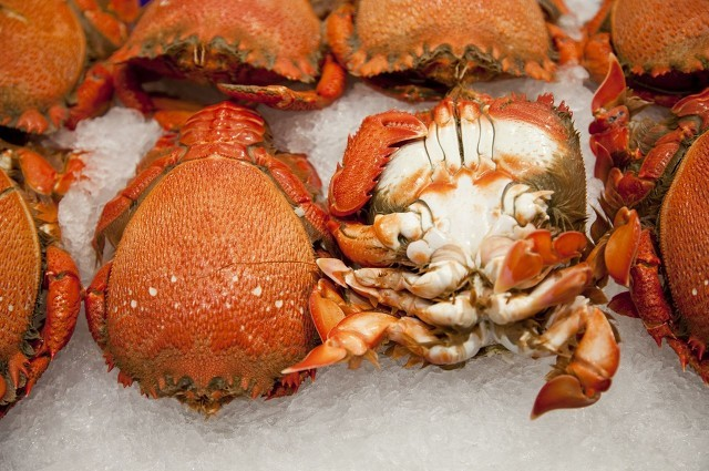 lly螃蟹1.jpg