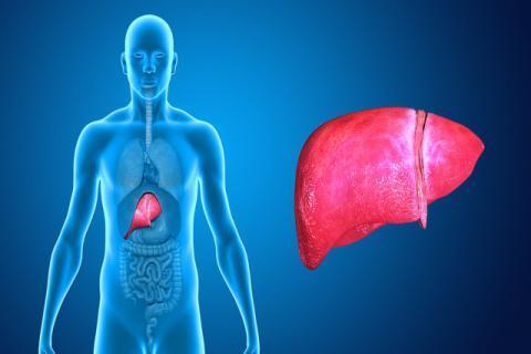 脂肪肝的早期症状有哪些?为保护肝脏做好防范措施