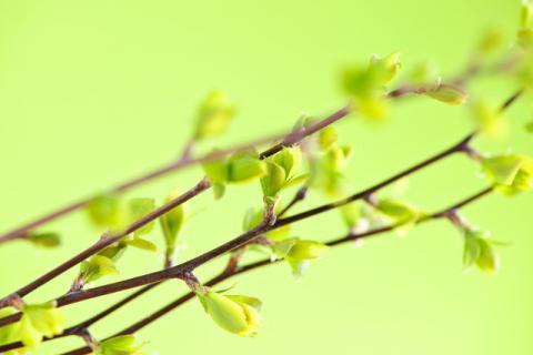春季养肝正当时,这几个禁忌不能不知