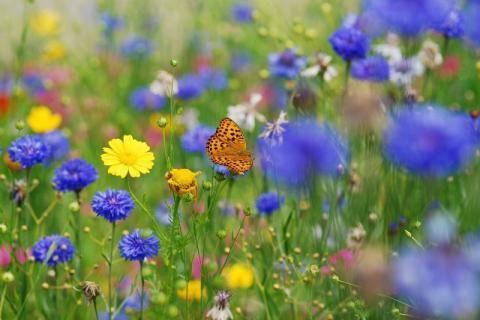 """春季""""心""""花怒放的时候,记得呵护我们的脆弱心脏"""