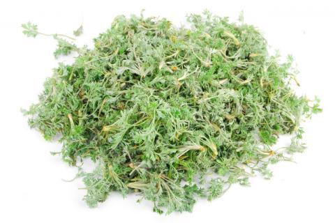 二月春季药效最高的野菜――白蒿