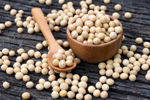 黄豆虽有营养,但不宜与这些食物搭配食用