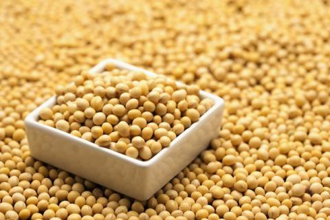 女性多吃黄豆有益于身体健康