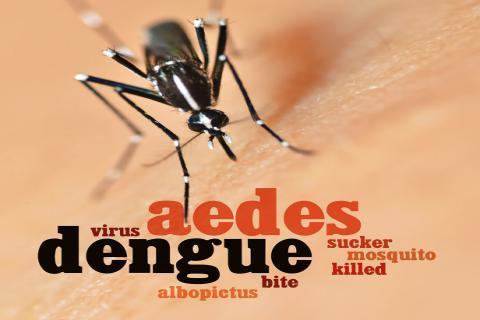 夏季即将来临,蚊虫叮咬后去痒小妙招