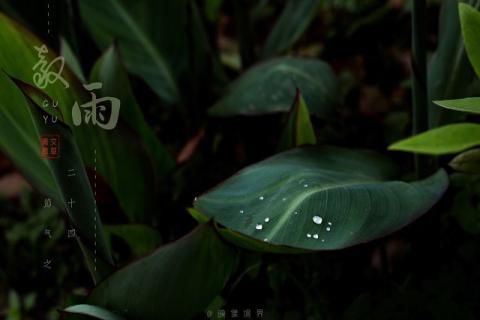 谷雨养生宜动不宜静,赶紧跑起来