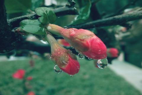 谷雨过后天气湿漉漉的,小心湿气入侵孩子身体