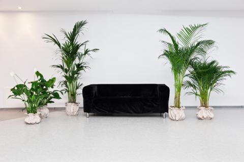 家中摆放这几种植物,从此摆脱空气清新剂