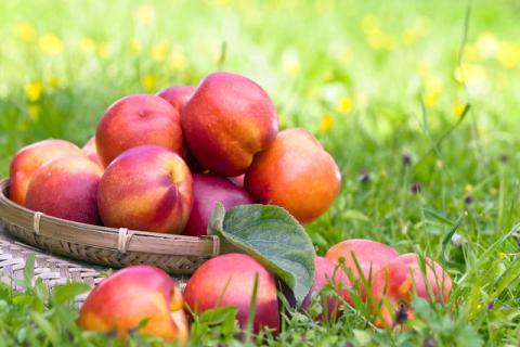 吃油桃的好处有哪些,哪些人不适合吃油桃