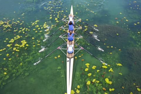 一湖春色中飘荡着自由的灵魂――菱角