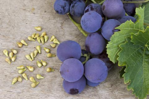 """被丢弃的一种营养品,葡萄籽的功效有哪些"""""""