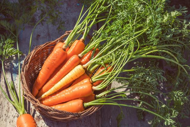 夏天能种什么菜?夏天种菜可要注意这几点