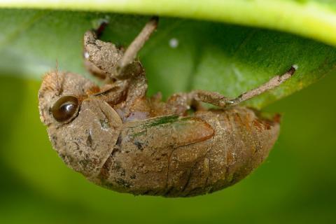 土壤中蠢蠢欲动的金蝉,总会在树枝间鸣叫