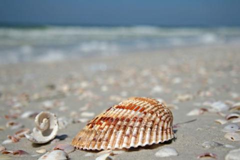 慢慢打开河蚌的外壳,品尝人间美味