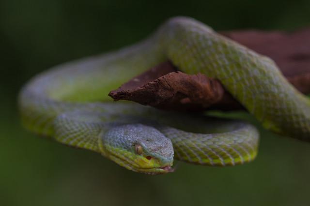 被蛇咬伤急救需要注意哪些方面