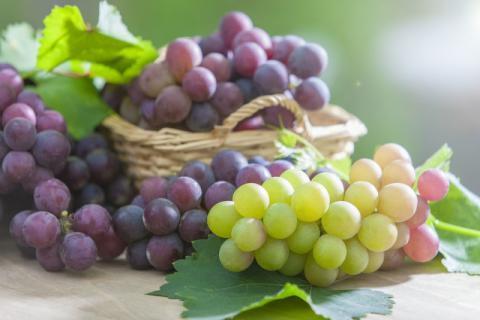 葡萄的种类有哪些,分别有哪些功效和作用