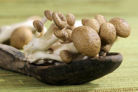 口感鲜香无比,菌菇种类中比较独特的菌种――蟹味菇