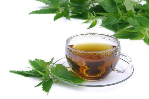 佩兰泡茶有哪些功效和禁忌,幸好今天知道了
