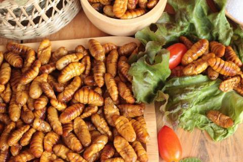 食用蚕蛹之前要如何处理异味呢?蚕蛹的食用方法