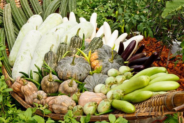 <a href=https://www.sandingtv.com/baike/sc/ target=_blank>蔬菜</a>45.jpg