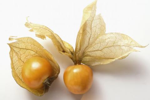 满洲乳果的食用功效以及食用方法有哪些