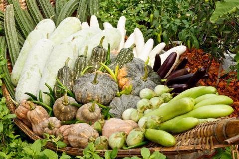 立秋之后哪些蔬菜过季,你购物单上的蔬果该更新了