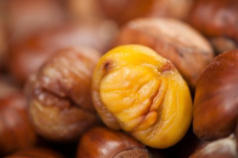 板栗的营养价值及功效 健脾养胃促食欲
