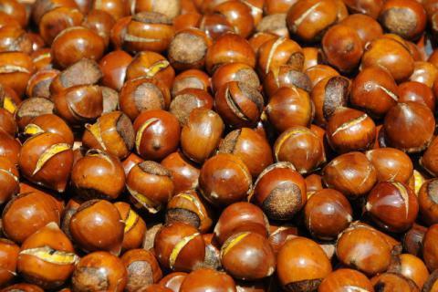 秋季吃板栗的好处有哪些,原来它才是秋季的养生高手