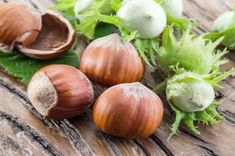 榛子有哪些功效,经常食用榛子对身体有哪些好处