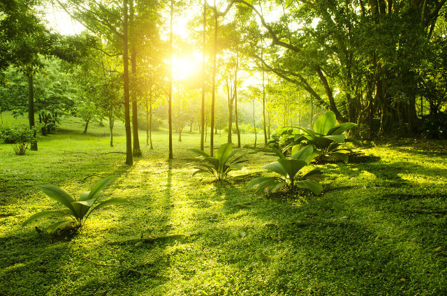 为什么晒太阳可以促进钙的吸收