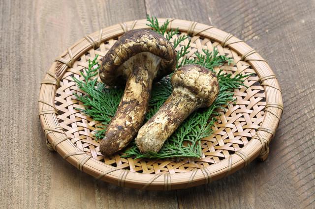 食用姬松茸对身体的好处有哪些