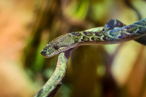 蛇肉的食用功效以及方法有哪些?不怕蛇的你可以适量食用滋补身体