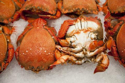 帝王蟹不同部位的食用方法有哪些