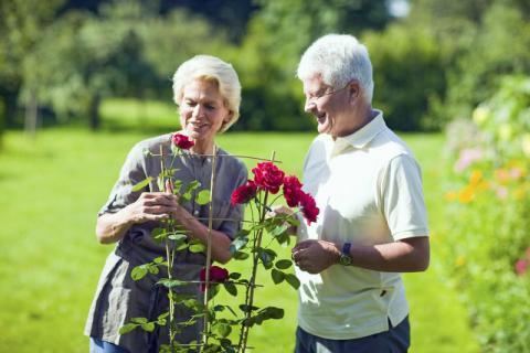 老年人常备的急救药物种类有哪些?老年人急救药物如何存放