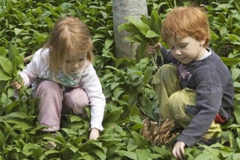 小孩子能够食用竹笋吗,为什么小孩子不能吃竹笋
