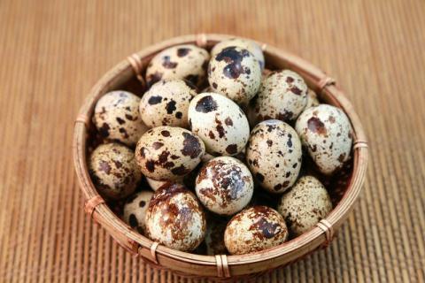 野生鹌鹑蛋要比普通鹌鹑蛋更有营养吗,鸡蛋和鹌鹑蛋哪个营养成分更高