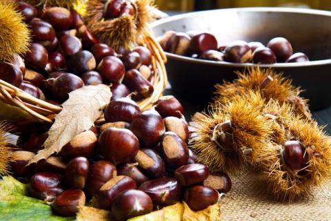 怎么保存板栗,生板栗如何剥皮,爱吃栗子的你需要了解一下!
