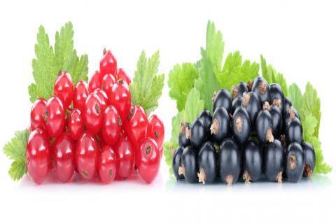 吃蔓越莓能排出白带吗