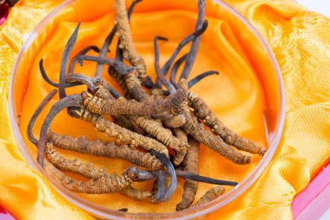 冬虫夏草泡水喝有什么功效,揭秘虫草食用的注意事项