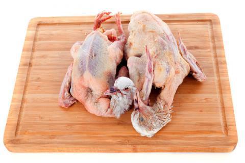 白鸽不能和什么食物同食?可得记好了!