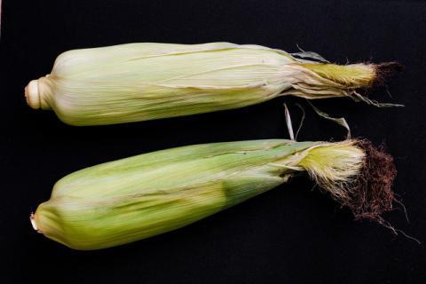 玉米一天吃几个合适,喜欢也要有个度!