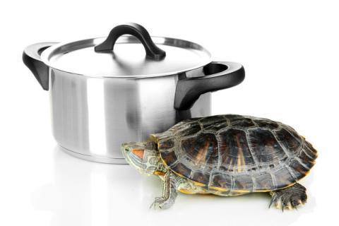 龟掌的食用方法