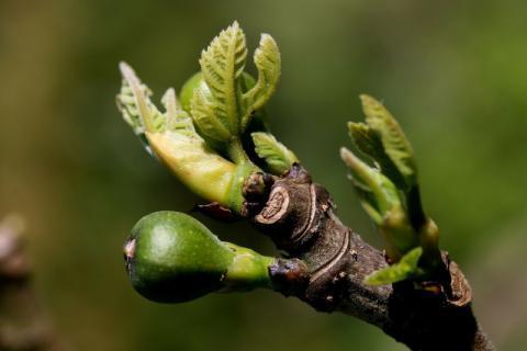 春天有什么特有的食物?这里为您推荐美食