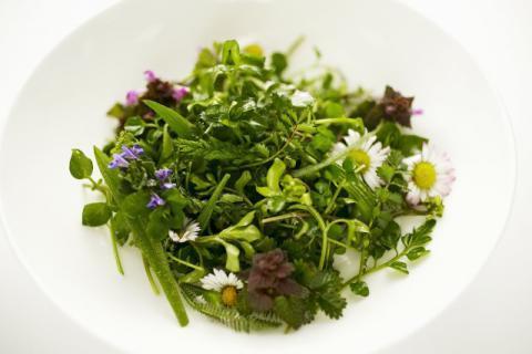 曲曲菜和荠菜有什么区别,吃野菜也要分清楚种类