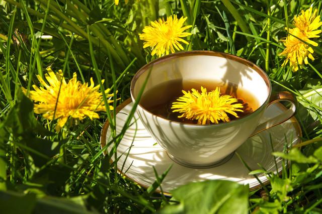 蒲公英茶有哪些功效与作用?能天天喝吗?