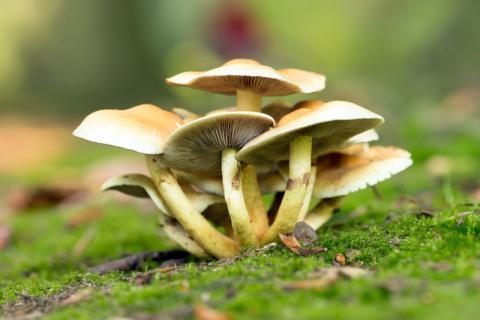 干炸蘑菇的做法:简单易做,比肉还好吃