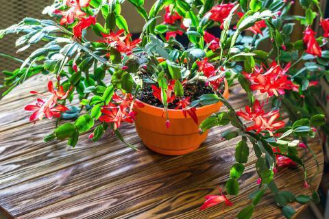 有花粉过敏症状不用急,四种防护方法来帮您
